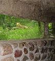 Eberswalde Zoo Loewin.jpg