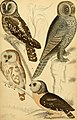 Edinburgh journal of natural history and of the physical sciences (1835) (21139362636).jpg