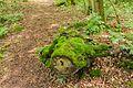 Eendenkooi De Grote Otterskooi, gelegen in provincie Overijssel. Bemoste stobbe op het voetpad 01.jpg