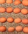 Eier in Sand.jpg