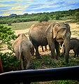 Elephant 101.jpg