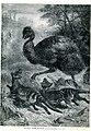 Emu and thylacines.jpg