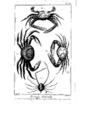 Encyclopedie volume 5-112.png