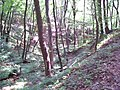 Erdő - panoramio - Attilawap.jpg