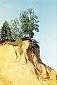 Erosion of the river Bank.jpg
