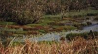 Eubenangee Swamp National Park Australia.jpg