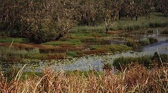 Eubenangee Swamp National Park - Eubenangee Swamp, 2001