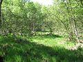 FFH 2325-301, Ohmoor, 8, Garstedt, Landkreis Segeberg.jpg