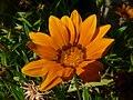 Fale - Giardini Botanici Hanbury in Ventimiglia - 642.jpg