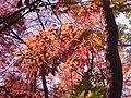 Fall at FLSP (5249376562).jpg