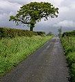Farm road to Blaencwm. - geograph.org.uk - 1313314.jpg