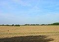 Farmland near Murrayfield House - geograph.org.uk - 236192.jpg