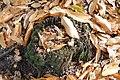 Feeding post, Appleslade Inclosure, New Forest National Park - geograph.org.uk - 1018838.jpg