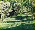Fence Line, Oak Glen 4-12-14a (13928958162).jpg