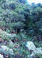 Fernwood indigenous forest - Aloe succotrina - CT.JPG