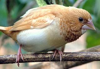 Vtáčí spev má gramatiku