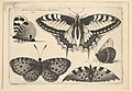 Five Butterflies MET DP823960.jpg