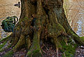Flickr - Laenulfean - the old root.jpg