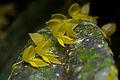 Flickr - ggallice - Orchid (12).jpg