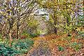 Flickr - ronsaunders47 - BARE TREES. BIRCHWOOD WARRINGTON UK..jpg