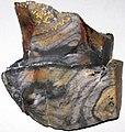 Flint (Vanport Flint, Middle Pennsylvanian; Nethers Flint Quarries, Flint Ridge, Ohio, USA) 218.jpg