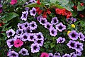 Flower (228547495).jpeg