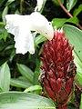 Flower (3610989903).jpg