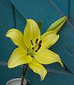 Flower (5966816414).jpg