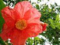 Flower vinsat2.jpg