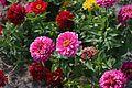 Flowers (TK1).JPG
