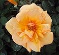 Flowers - Uncategorised Garden plants 271.JPG