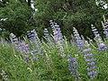Flowers Roxbourough Park (3999651496).jpg