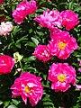 Flowers in Garden - Biei - Hokkaido - Japan (48028662632).jpg