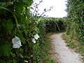 Footpath No 54 from New Mill to Little Tring - geograph.org.uk - 1408775.jpg