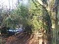 Footpath in Bushy Wood - geograph.org.uk - 1118248.jpg
