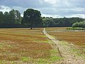 Footpath though stubble, Medmenham - geograph.org.uk - 963308.jpg