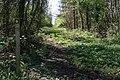 Footpath through Callan's Lane Wood - geograph.org.uk - 412361.jpg