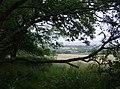 Footpath towards Chale Green - geograph.org.uk - 519610.jpg