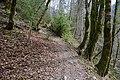 Forêt @ Alex (51098096183).jpg