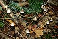 Forest Floor (Multnomah County, Oregon scenic images) (mulD0020).jpg