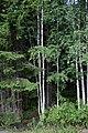 Forest detail in Dalarna.jpg
