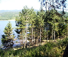 Forest in Bulgaria near Dundukovo dam.jpg