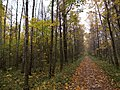 Forest road - panoramio - Arseny Khakhalin.jpg