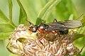 """Именно этот муравей является  """"рабовладельцем """", использующим в."""