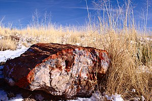 Petrified Forest National Park - A petrified log in the Petrified Forest
