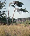 Fotothek df ld 0003089 001d Landschaften ^ Insellandschaften ^ Bäume.jpg