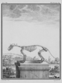Fouine, Squelette - Beech Marten, Skeleton - Gallica - ark 12148-btv1b2300254t-f23.png