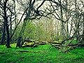 Frühling im Lödderitzer Forst.jpg