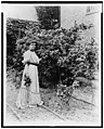 Frances Benjamin Johnston, full-length portrait, standing in her garden, by rose bushes, with some flowers in her hand, facing slightly right LCCN98506473.jpg