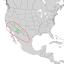 Fraxinus velutina range map 1.png